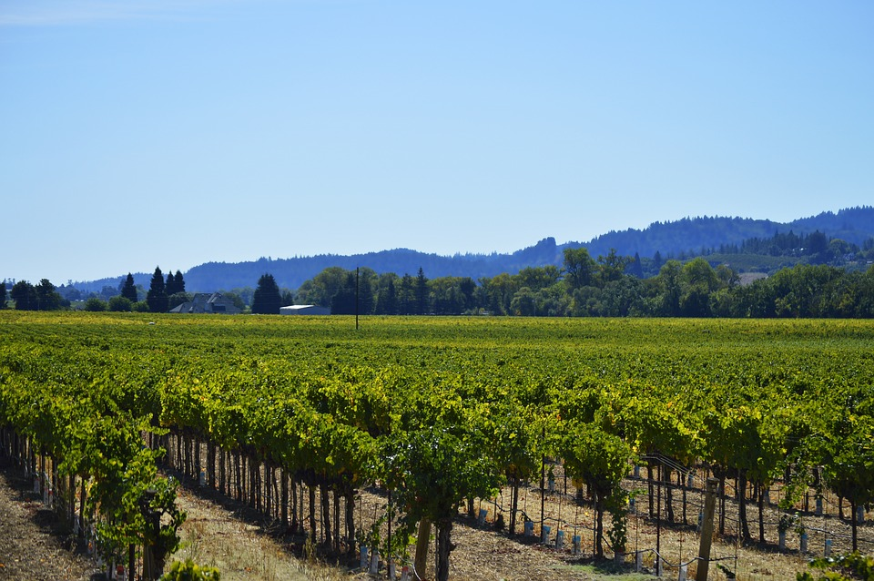 Sonoma county experiments with groundwater banking